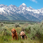 0003 Indy and Bodhi and Teton Range_Jackson_Hole